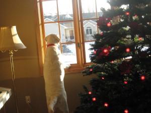 Christmas 09 - Beau 004